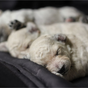 Warm Puppies sleeping on a blanket