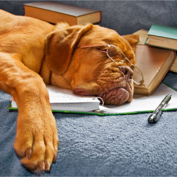 dog sleeping on top of books and pens