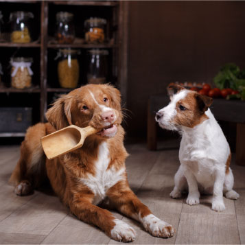 dogs in a pantry holding a wooden scoop on the mouth